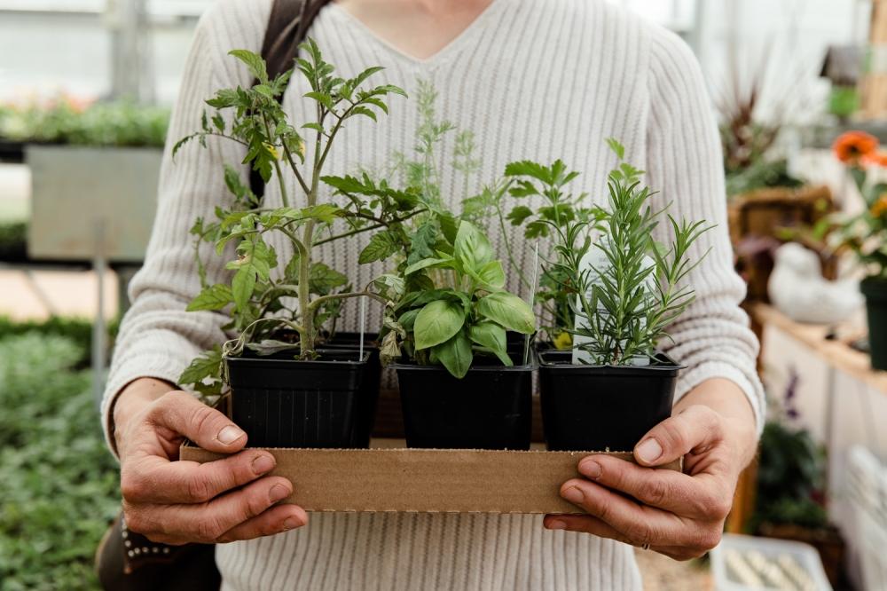 hands on herbs.jpg